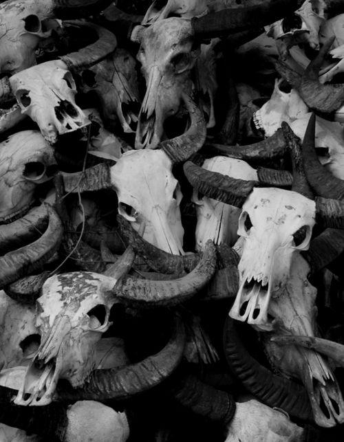 absinthius:    Genocide