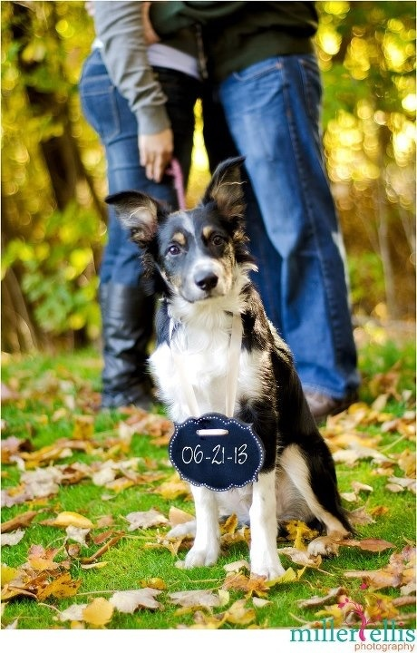 Save the date with dog Chalk board