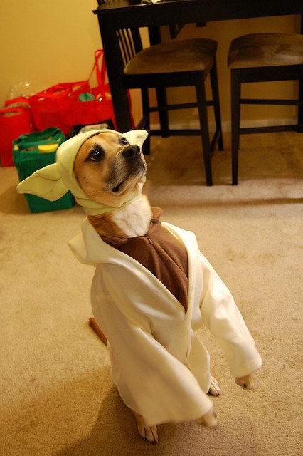 This super cute Yoda pup who is full of wisdom. | 22 Dogs Who Totally Nailed The Geeky Halloween Costumes