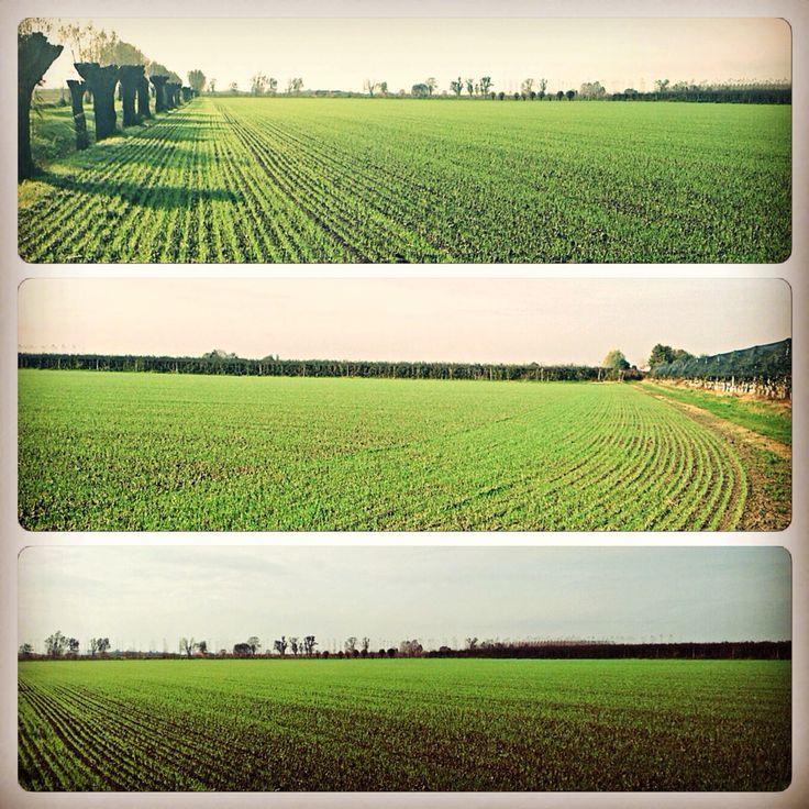 Ed è già iniziata la stagione 2014/2015. Ecco il #frumento appena nato (grano tenero). #wheat #agricoltura #coltivazione #tenutalapila #passioneagriturismo