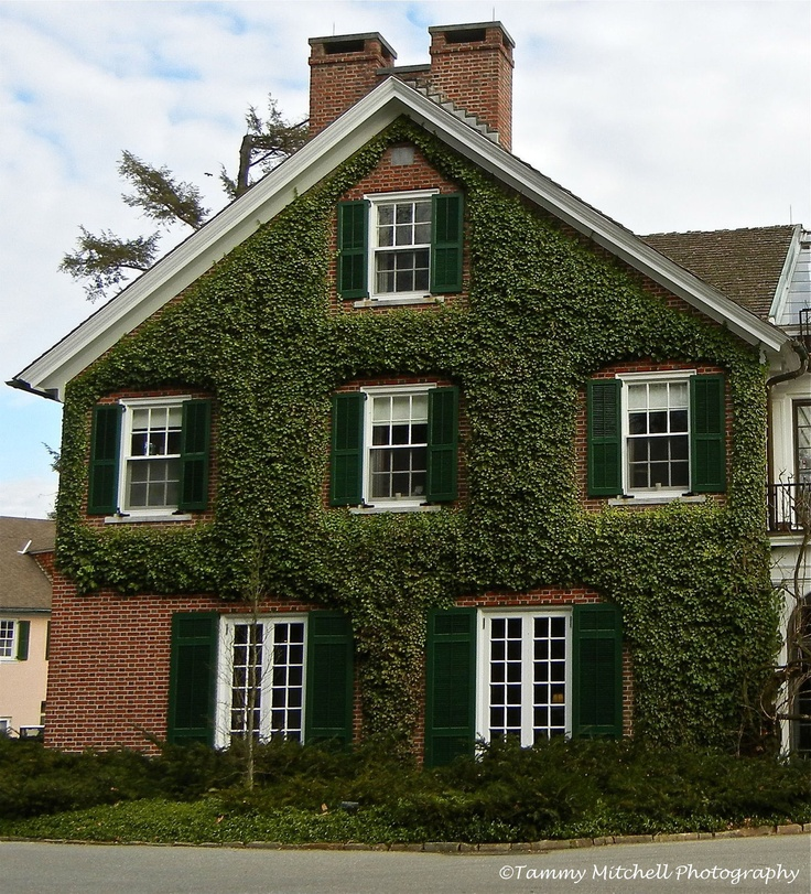 Items Similar To Ivy Covered House On Etsy