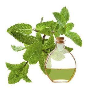 Comment faire de l'huile essentielle de menthe. L'essence de menthe est une des plus estimées en aromathérapie pour le traitement de maladies respiratoires comme pour favoriser le bien-être physique et mental. Elle compte plusieurs propriétés médic...