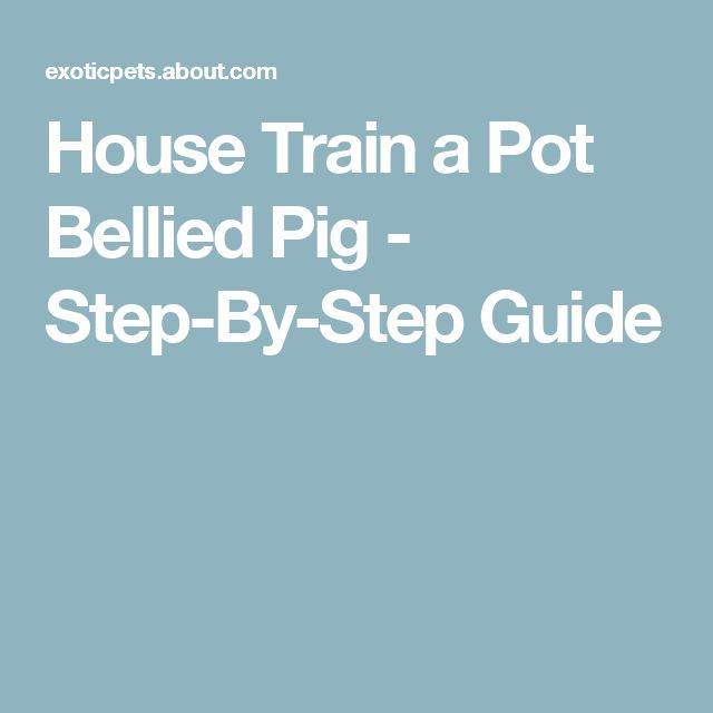 House Train a Pot Bellied Pig - Step-By-Step Guide