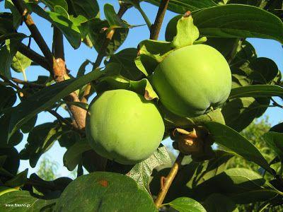 Πως να μην πέφτει  ο καρπός των δέντρων http://ift.tt/2wgKJCk