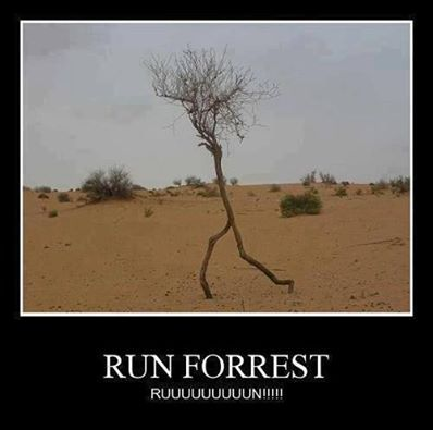 RUN FORREST!  ~whoever has no clue what I'm talking about, watch Forrest Gump. It's available on Netflix.