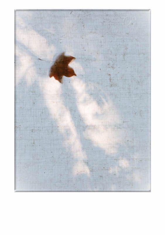 Project: jaar van het licht - Vallende bladeren