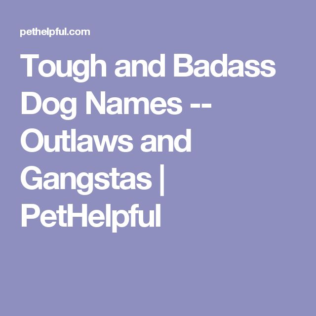 Tough and Badass Dog Names -- Outlaws and Gangstas | PetHelpful