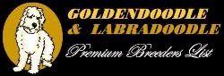 Multigen Mini Medium Goldendoodles page 5