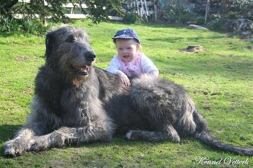 My favorite dog! Cannot wait to have mine!!! Soon!!!! Check more at http://hrenoten.com