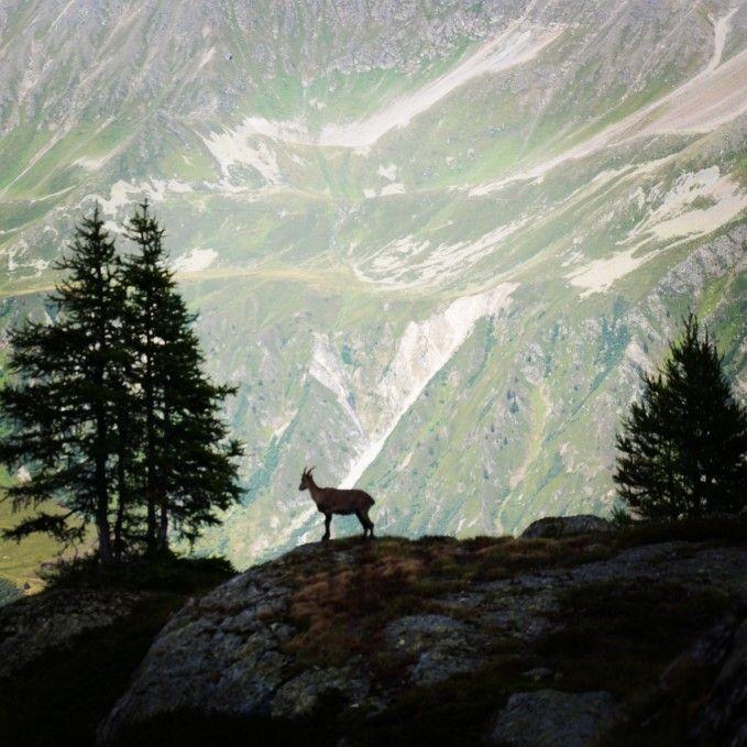 Belle rencontre - massif du Mont blanc