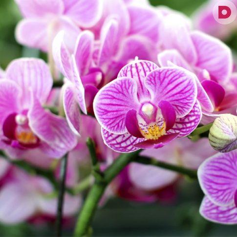 Большинство орхидей ценится за оригинальные цветки и <br /> длительность цветения. Так как требования к выращиванию этого растения немного отличаются от привычных, иногда орхидея довольно долго отказывается цвести.