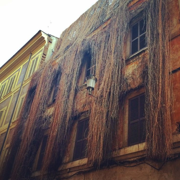 #rome #roma #italy #italia #palace #plants #architecture #garden #old
