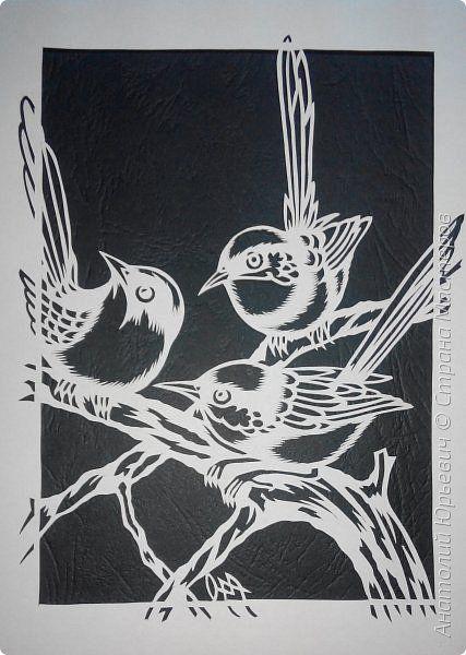 Всем доброго времени суток! Вашему вниманию новая открытка с птичками. - Блестящий расписной малюр (лат. Malurus splendens) — птица из семейства малюровых. Встречается на большей части Австралии от центральной части западного Нового Южного Уэльса до юго-запада Квинсленда по всему побережью Западной Австралии. - Среда обитания птицы простирается от леса, до пустынных кустов обычно с достаточным количеством растительных укрытий. Питается, в основном, насекомыми и семенами. - Эскиз для…