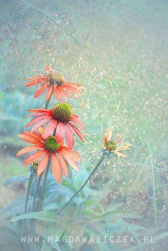 """Flowers make me happy"""