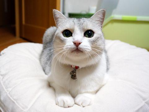 ワケあり蔵出し猫写真  うにオフィシャルブログ「うにの秘密基地」Powered by Ameba