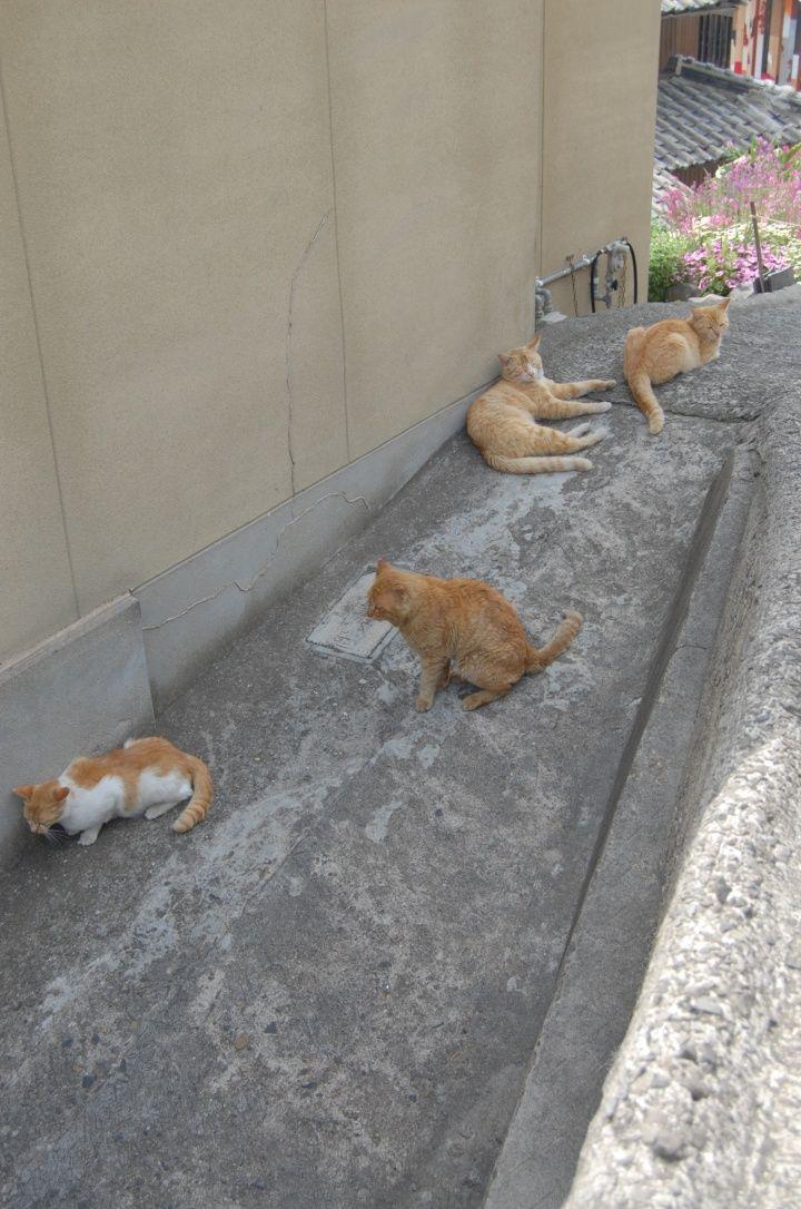 男木島の猫たち  Ogijima Cats