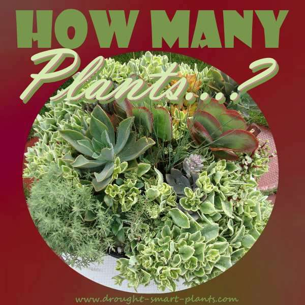 How Many Plants can I plant into a shallow dish?