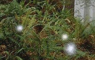 Les herbes magiques En magie, les plantes sont très importantes car la symbiose de l'esprit à la nature est la base de la relation. Elles ont chacune leurs propriétés magiques, en voici quelques-unes: Acacia On peut brûler cette plante pendant les séances...