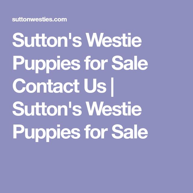 Sutton's Westie Puppies for Sale Contact Us | Sutton's Westie Puppies for Sale