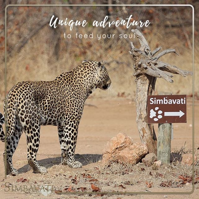 Why do we recommend the brand new Simbavati Trails Camp?  This unique adventure feeds the soul and creates time and space for a personal journey whilst discovering the fibers of nature and lifeblood of the bush. It's an experience of a lifetime!  . . . #Simbavati #Travel #Bush #Holiday #Getaway #AfricanSafari #Camp #Trails #Africa #Lodge #Walking