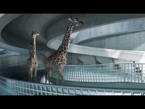 HIGH DIVING GIRAFFES -- This Video Will Absolutely Mesmerize You, So Get Ready Before You See It - NewsLinQ