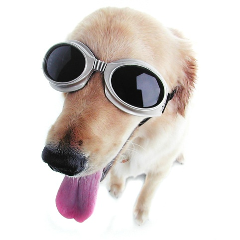 Doggles from Firebox.com