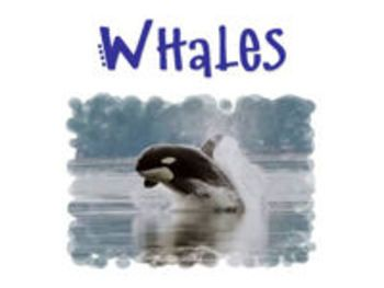 """All About Whales"" is a PowerPoint Show that teaches general facts about whales and then gives specific facts and photos of killer whales, blue whales, humpback whales, and beluga whales. This PowerPoint Show is a fun way to teach and/or review information about whales with your students!     This PowerPoint Show also goes well with ""Whales Galore"" from our TpT store! It includes whale-themed lessons and materials for reading, writing, math, and science!"