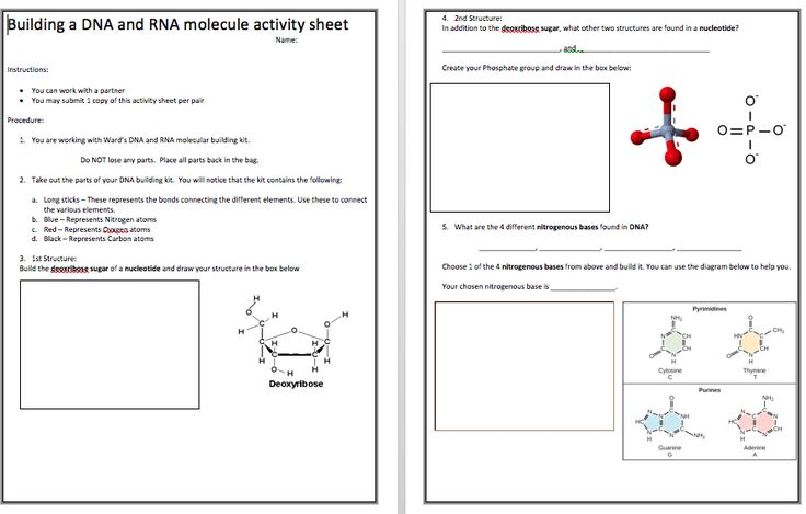 Biology – Building DNA and RNA molecule student activity with Ward's DNA lab building kit