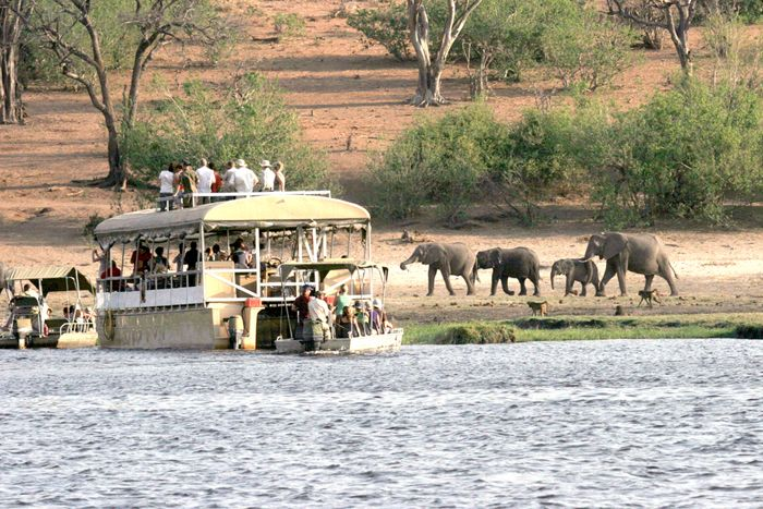 Championing the Chobe National Park | http://underonebotswanasky.com/camps/chobe-bush-lodge.php | #Chobe #ChobeBushLodge