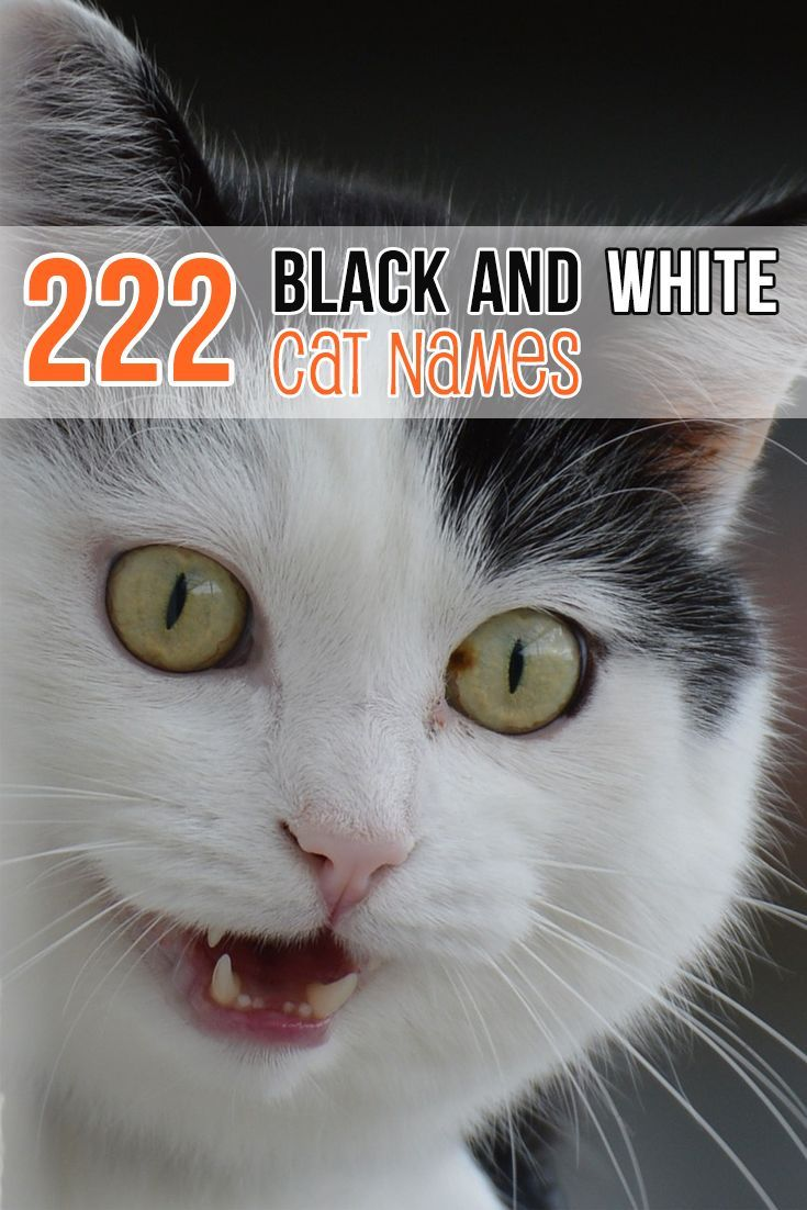 50 Unique Cat Names Cat Guides Girl Cat Names Cute Cat Names Kitten Names