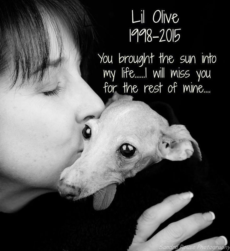 """Puppy Mill Mom Trapped In Cage for 12 Years Finally Treated With Dignity--""""Pam has shared Lil Olive's life — and passing — with hundreds of thousands of people across the world through Lil Olive's Facebook page with the intention of raising awareness about what the breeding industry did, and does, not only to Lil Olive, but to all the many thousands of other dogs, most of whom will never get out of the puppy mills alive."""""""