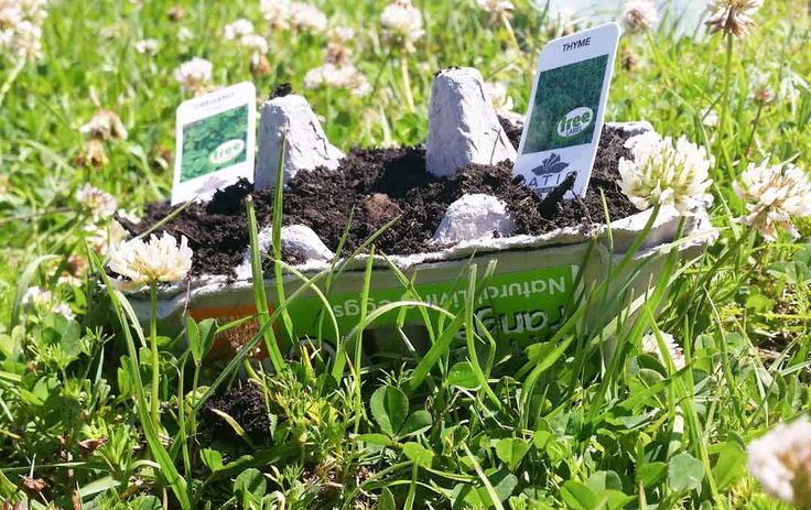 Egg Carton Gardening!  Trees are in bloom, birds are singing (and swooping), and the last of winter's chilliness is drifting away. To celebrate, we thought it best to introduce children to the world of gardening while at the same time encouraging recycling for sustainability.