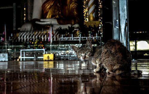 Non disturbare il gatto quando prega! Birmania, tempio Buddista. by cenzovacca, via Flickr