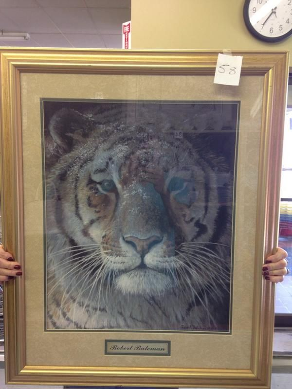 """Don't forget to check out our monthly stores auctions! This Robert Bateman print entitles """"Tiger at dusk"""" is a great find!"""