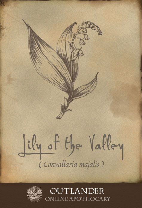 Lily of the Valley. Used in the 18th century to treat heart conditions and dropsy, this highly toxic plant was to be used only by professional healers.  #Outlander #ApothecaryCabinet
