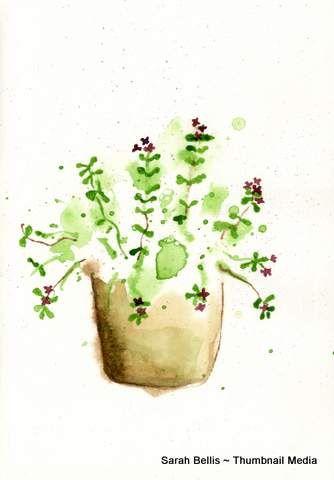 Pansies in a pot Sarah Bellis Designs www.thumbnailmedia.com