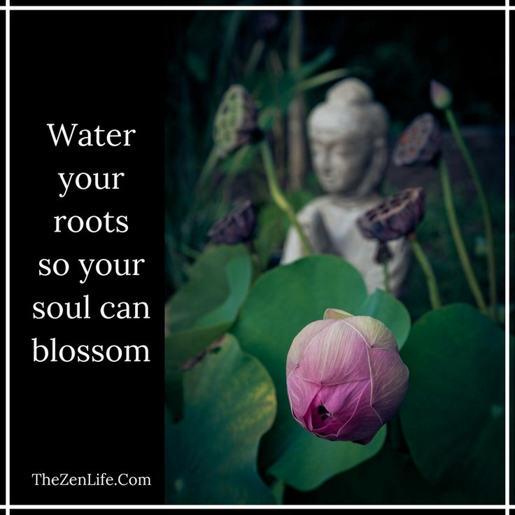 Water your roots so that your soul can blossom. #Zen #TheZenLife #Buddha #Mindful #Mindfulness #Soul #Yoga #Meditation #peace