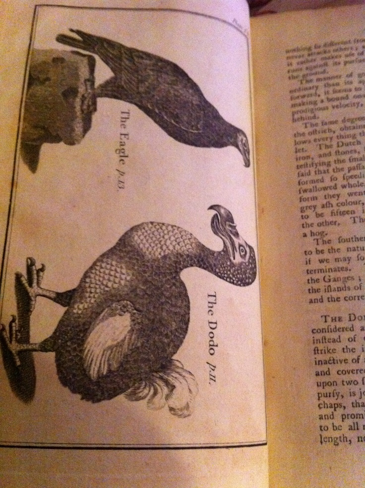 """The Dodo, still alive when Buffon's Natural History was printed. Advise inside suggested that """"three or four dodos can feed 100 men"""". No wonder they are now extinct!"""