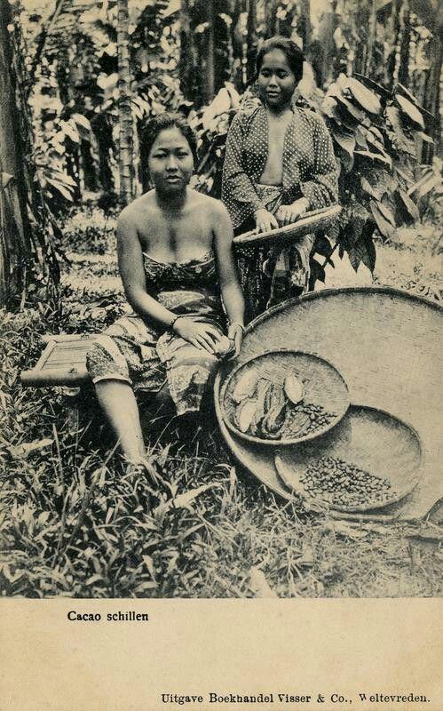 Vrouwen ontbolsteren cacao te Buitenzorg. 1900