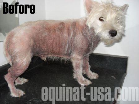 Best Dog Shampoo For Westies