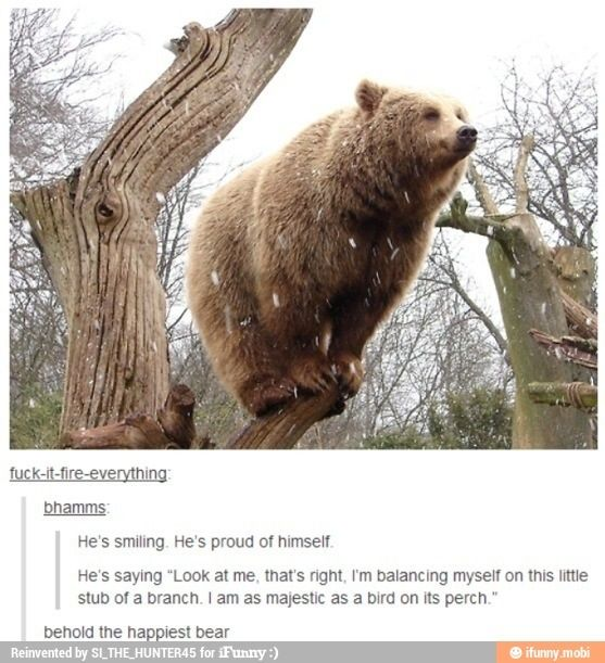 be the tree be the tree.  ninja bear blends in to its surroundings.