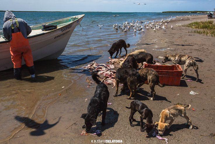 Fisherman after a hard day of work #josafatdelatoba # #mexico #bajacaliforniasur #loscabos #landscapephotography #cabophotographer #fishing