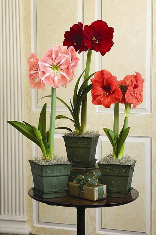 14 best amaryllis images on pinterest floral arrangements bridal 64 homemade christmas gift ideas junglespirit Gallery