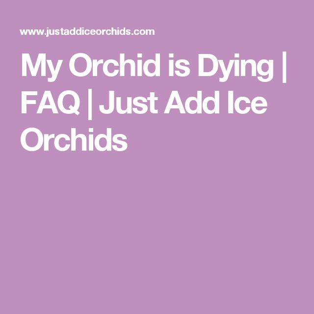 My Orchid is Dying | FAQ | Just Add Ice Orchids