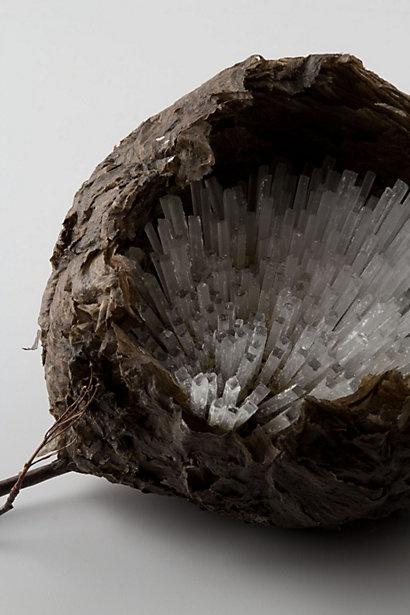 Glass Cane Wasp Nest