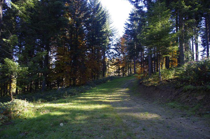 #biegowkiwbieszczadach #biegowki #ustjanowa #ustrzykidolne #trasybiegowe #crosscountryskiing #nordicski #bieszczady #jesien #autumn #las #nordicwalking