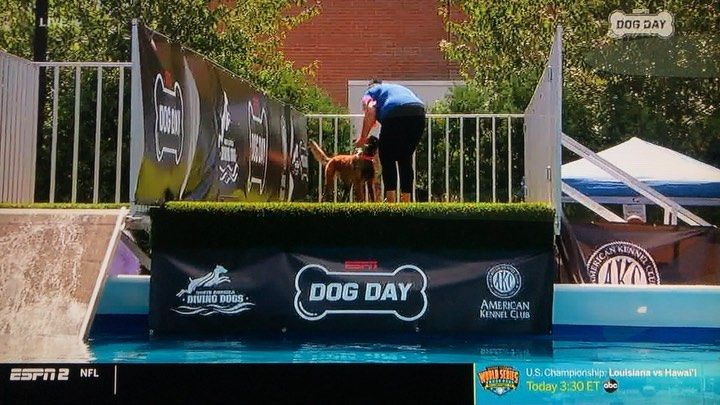 Great Day For Dog Sports At The Espndogday Yesterday Shiva Snagged First Place In The Open Diving Dogs Competi Dog Competitions Dogs With Jobs Sporting Dogs