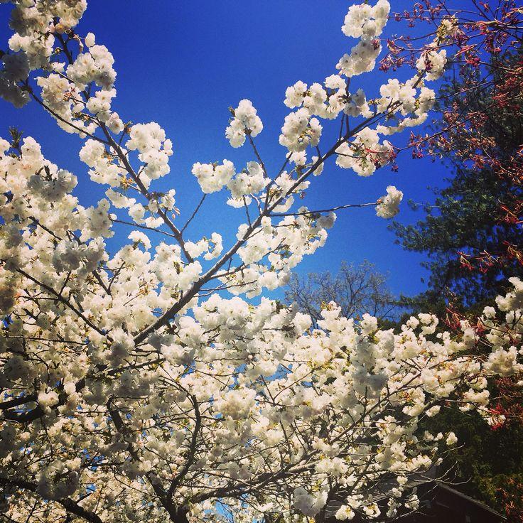 #BrooklynBotanicGarden #spring