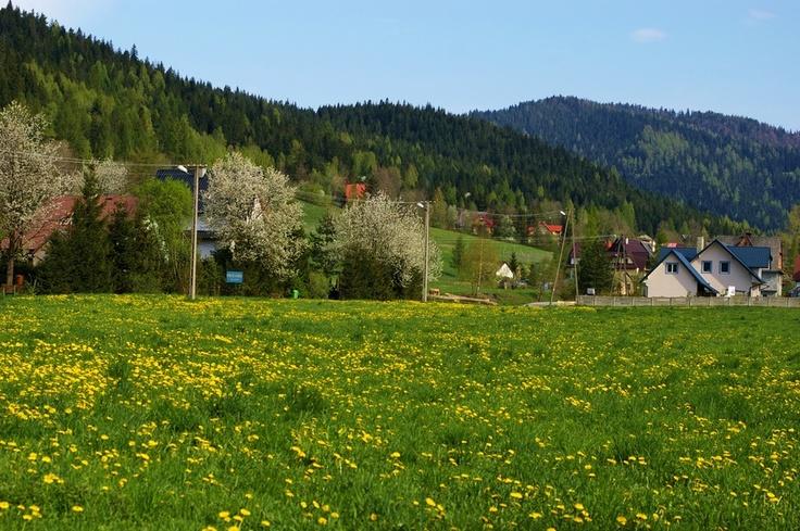 Koninki, Gorce, near Poręba Wielka, spring