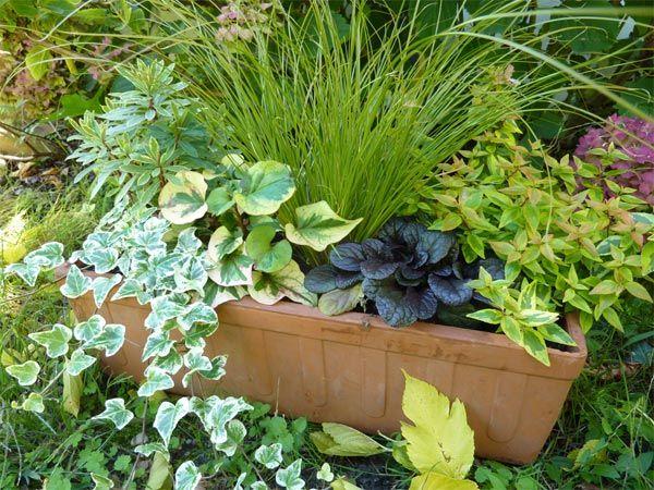 Composition d'automne en jardinière